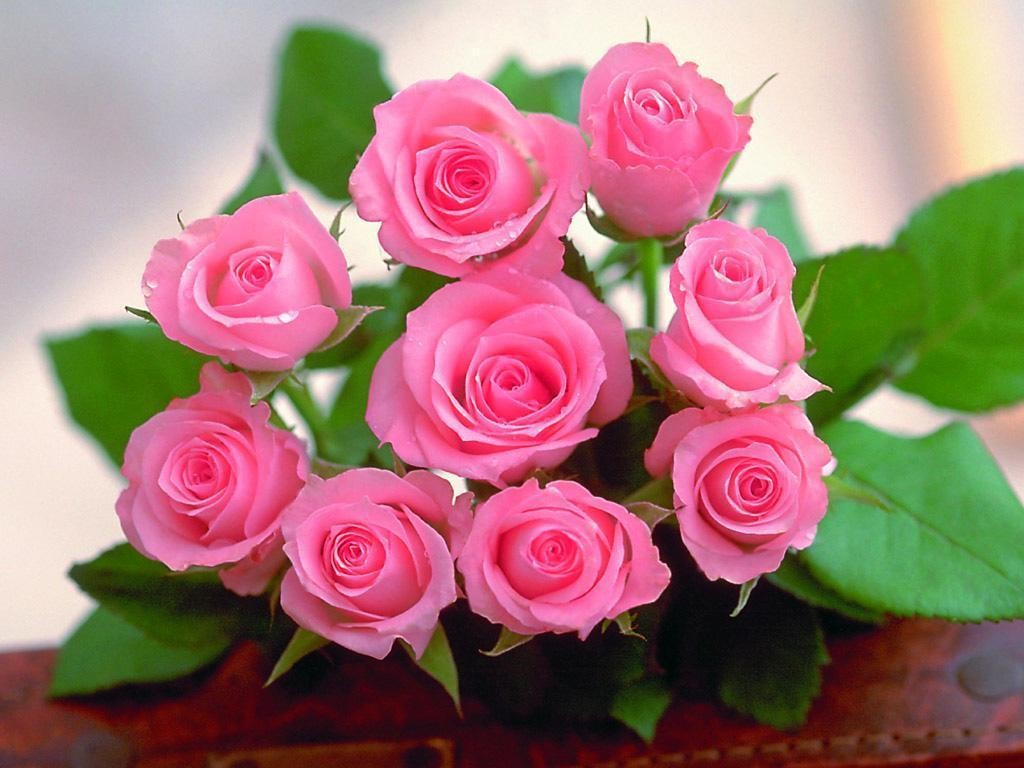 The-Rose-of-Love-roses-13967150-1024-768