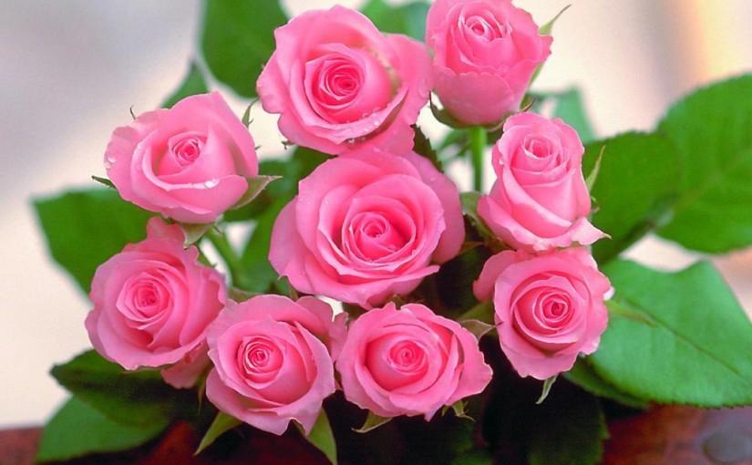 Fredags rosor…